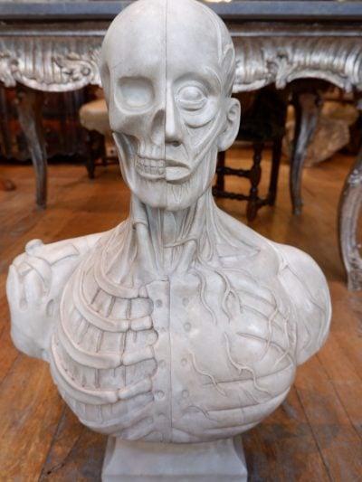 Buste d'écorché en marbre de carrare – d'aprés le modèle de Houdon fin XIXe